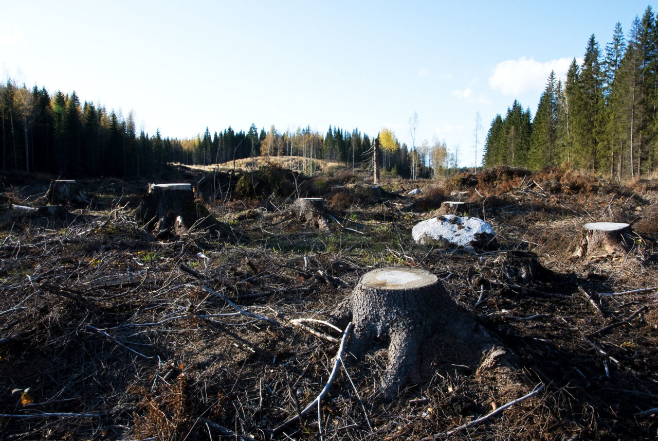 https://thesubmarine.it/wp-content/uploads/2016/07/Clearcutting_in_Southern_Finland-1280x857.jpg
