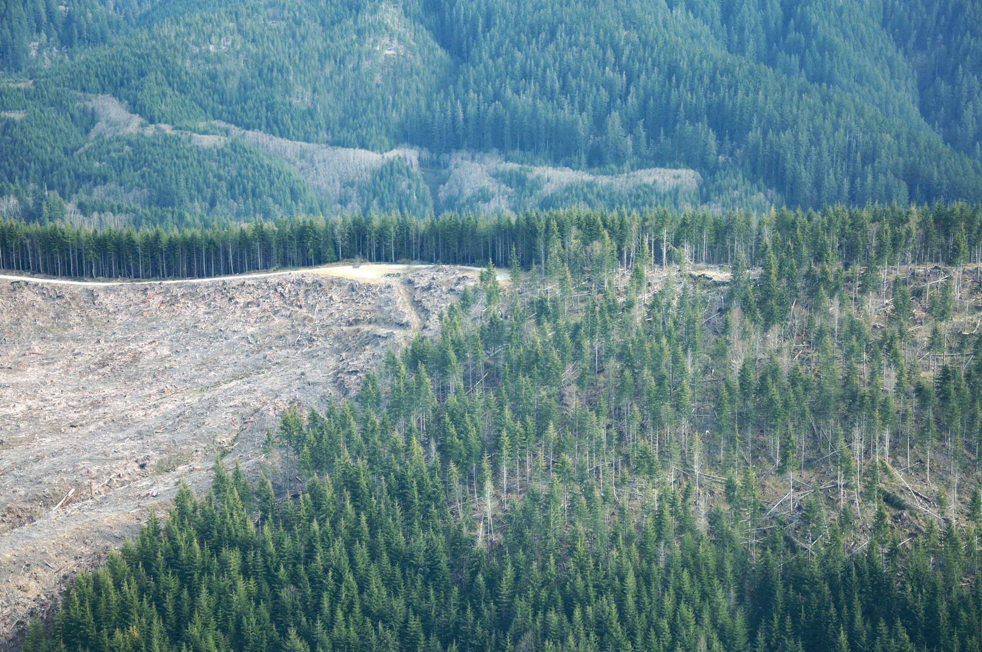 Thinning_versus_clearcutting