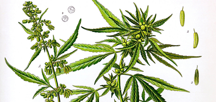 facts-about-marijuana-1