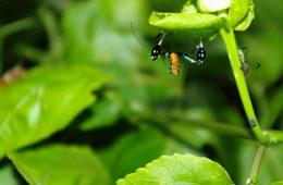 Amazonian Jungle, Peru