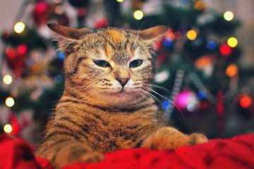 sad-christmas-desktop-background-2