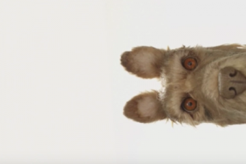 Wes Anderson, Isle of Dogs