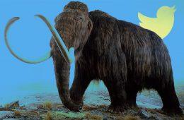 Mammut e twitter