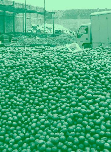 oil-will-be-extracted-from-avocados-like-these-to-be-used-in-cosmetics-and-then-exported-1