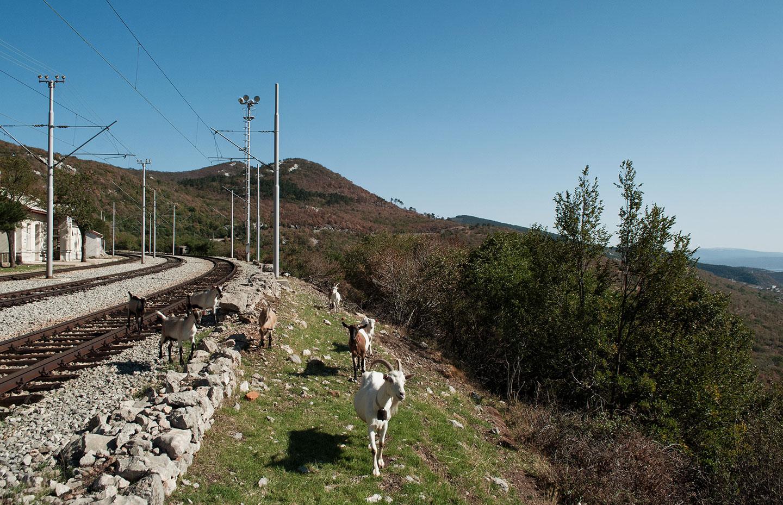 Alla stazione di Meja, sulle montagne alle spalle di Fiume, ci sono più capre che umani.