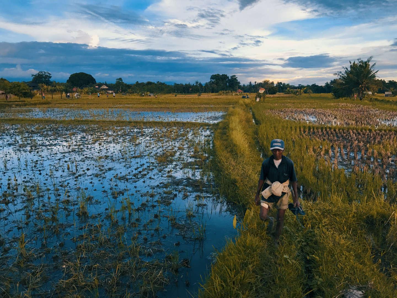 Un contadino nelle risaie alle spalle di Ubud