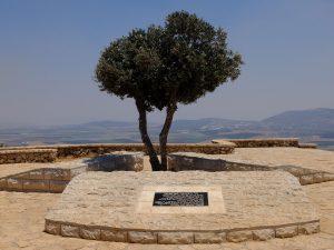 Un ulivo sul Monte del Precipizio, Nazareth