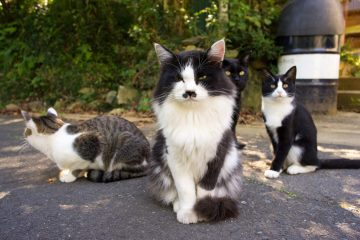 cover-cat-heaven