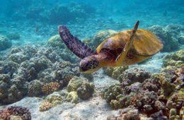 1024px-hawaii_turtle_2-2