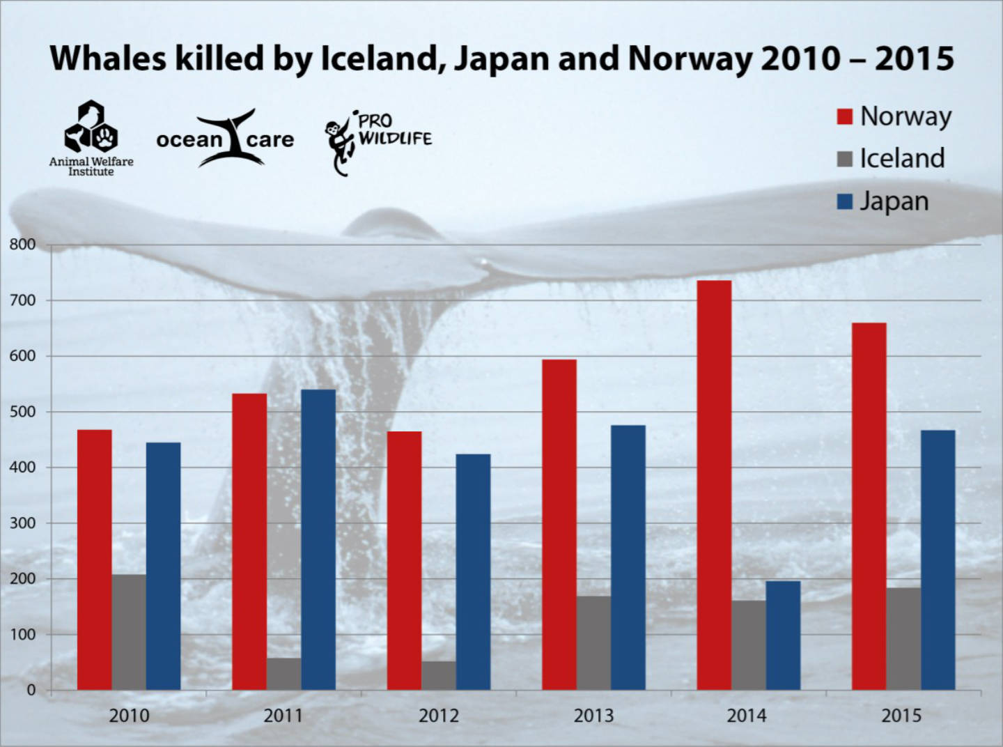 whales-killed-by-japan