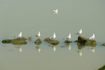 delta_del_po_-_teoria_di_uccelli
