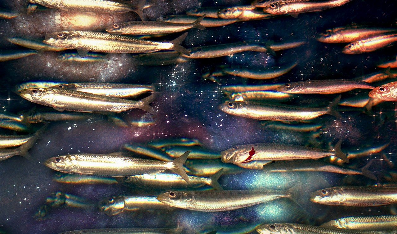 Le sardine sono l'unica opposizione di piazza alla destra, ed è questo il problema