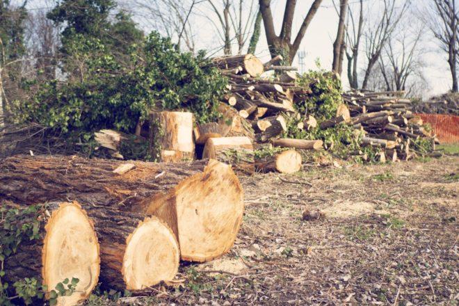 Il taglio del bosco La Goccia durante la quarantena